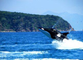 hon tam island nha trang activities (1)