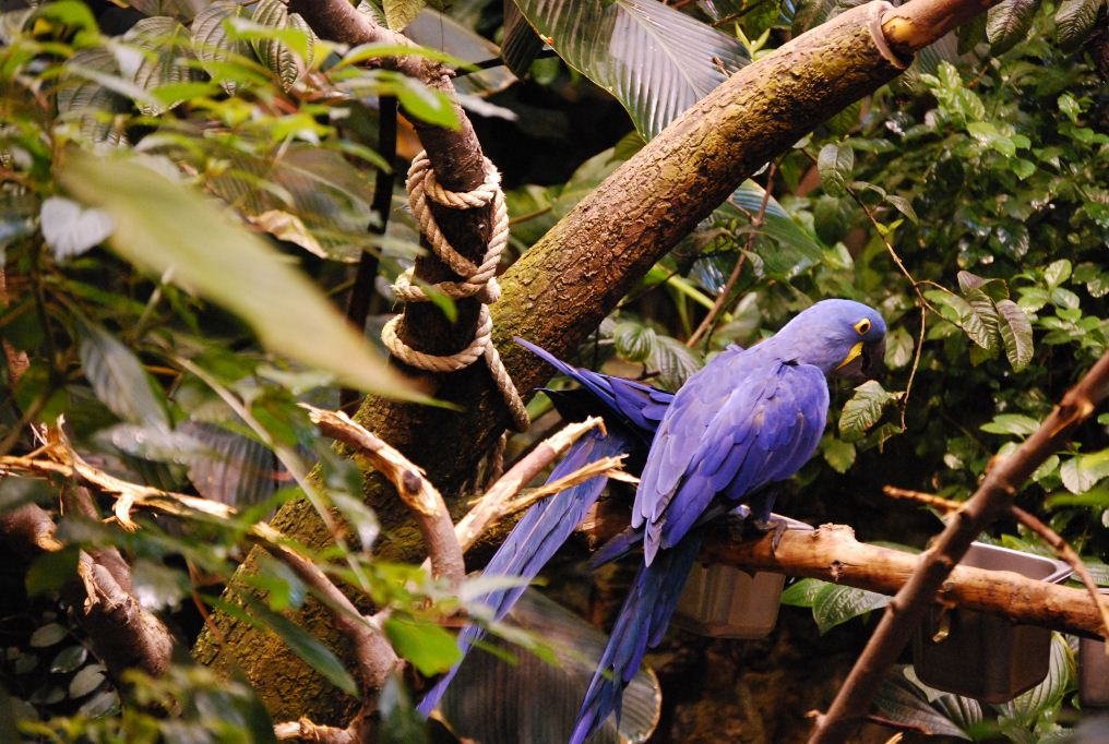 Montreal Biodome which includes bird life 2
