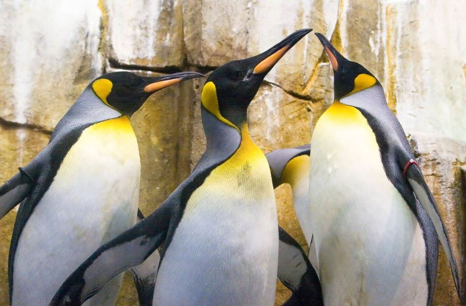 Montreal Biodome which includes bird life 3