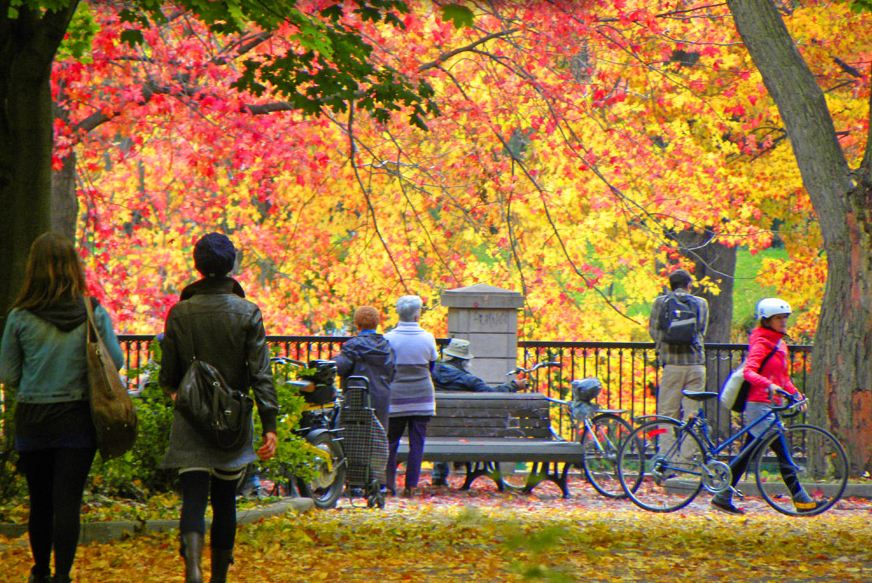 Montreal in the Autumn