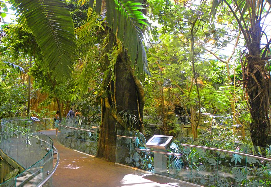 tropical forests biodome montreal. Image of Montreal travel blog