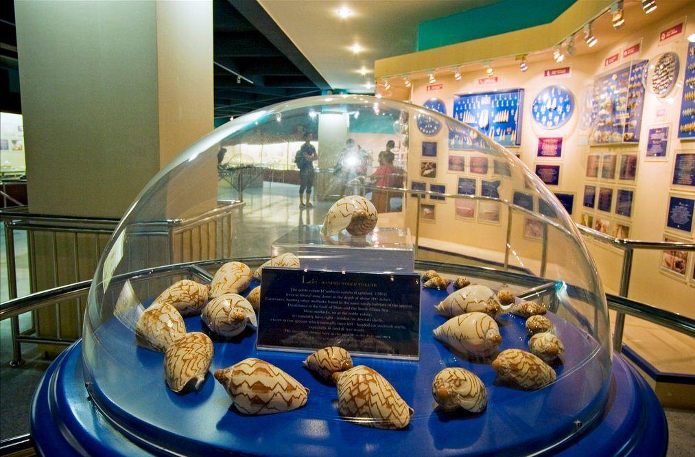 phuket seashell museum 2. image of phuket travel blog