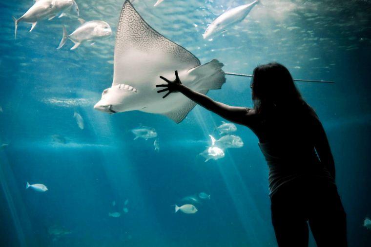phuket underwater aquarium