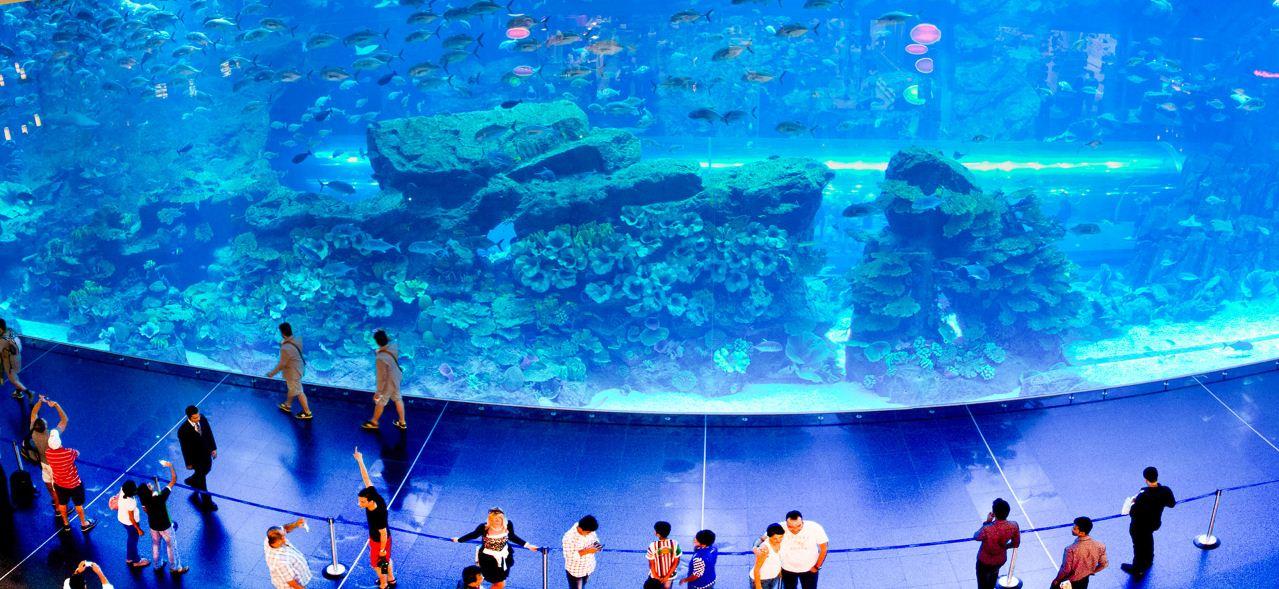 aquarium dubai malls shops (4)