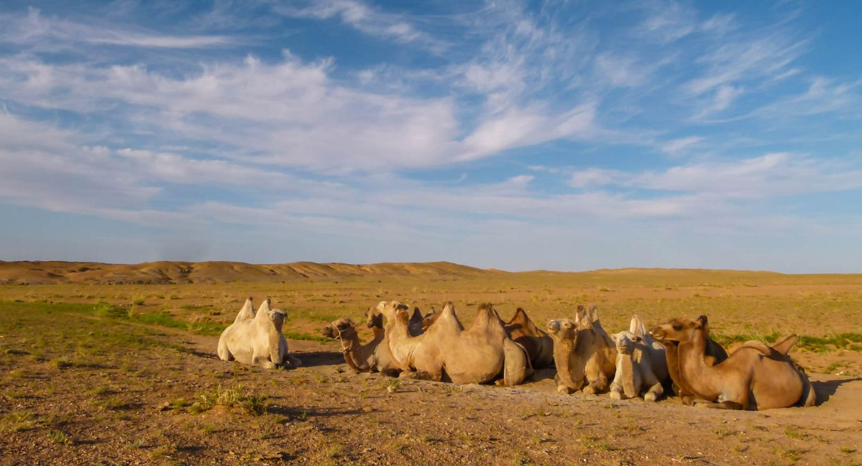 Image of Mongoglia travel blog.Camels