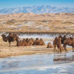 Gobi desert tour — 12 wonderful days road trip in Gobi desert