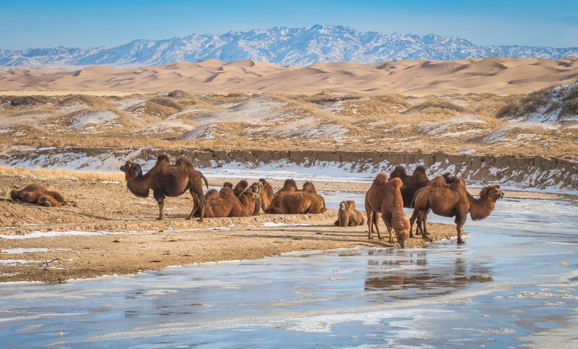 gobi desert tour 12 wonderful days road trip in gobi desert