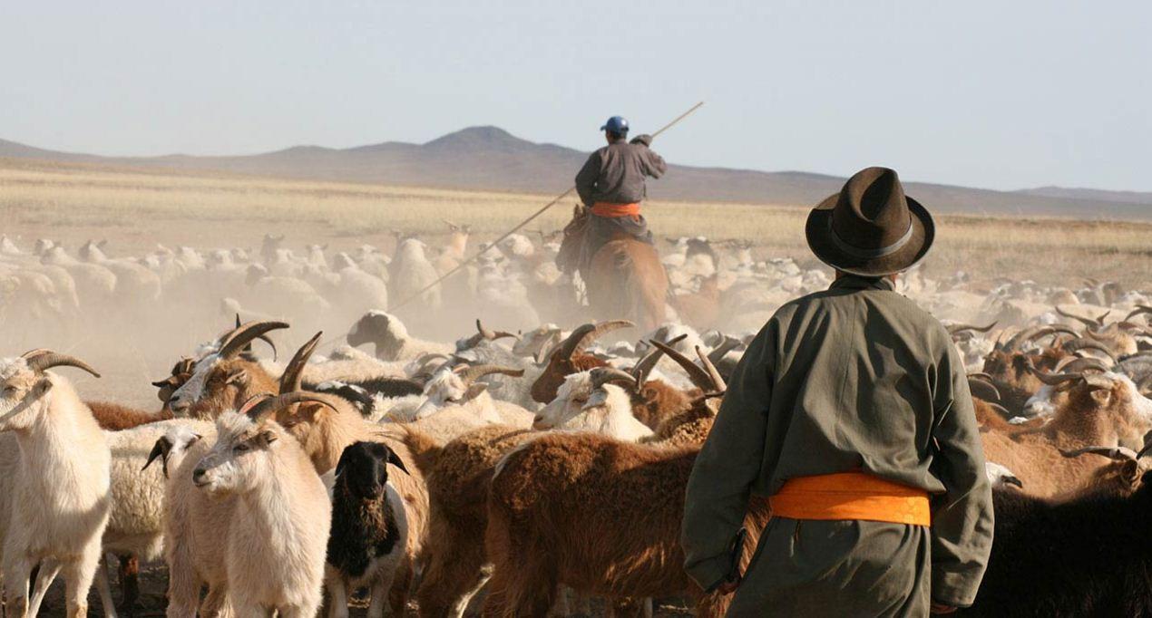 nomadic life of mongolian