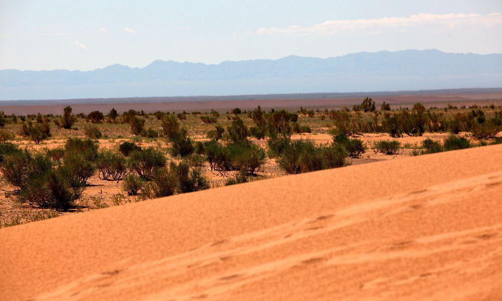 plants gobi desert 24