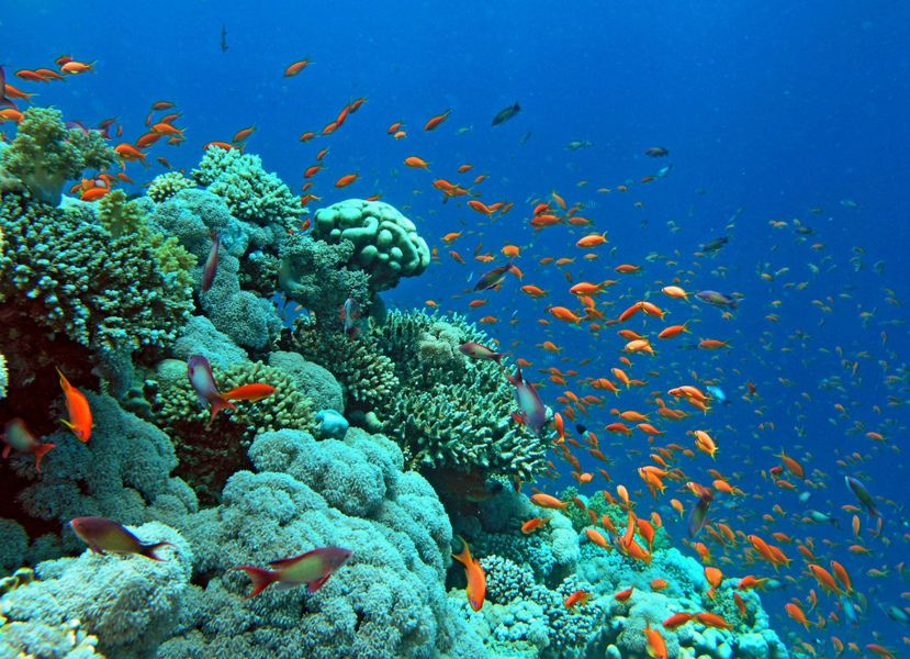 island-coral-koh larn-thailand-pattaya (4)