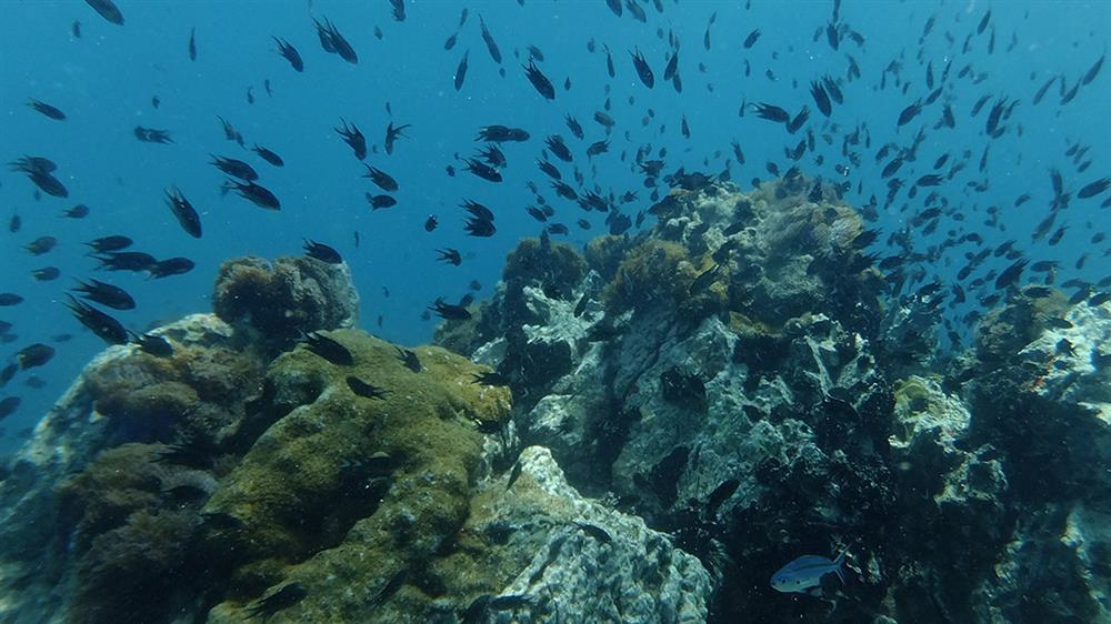 island-coral-koh larn-thailand-pattaya (6)
