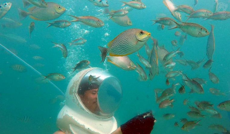 Koh Larn Island diving
