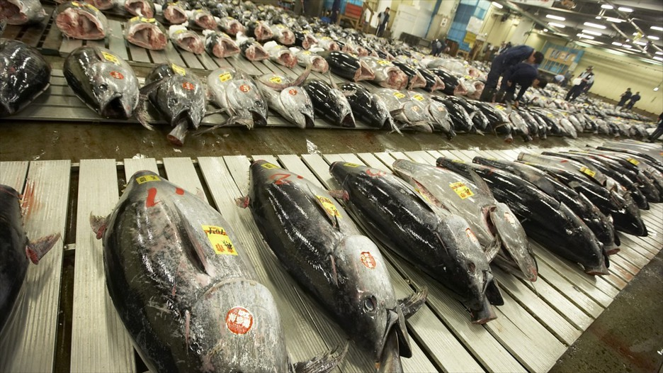 Tsukiji-Fish-Market, Bangkok