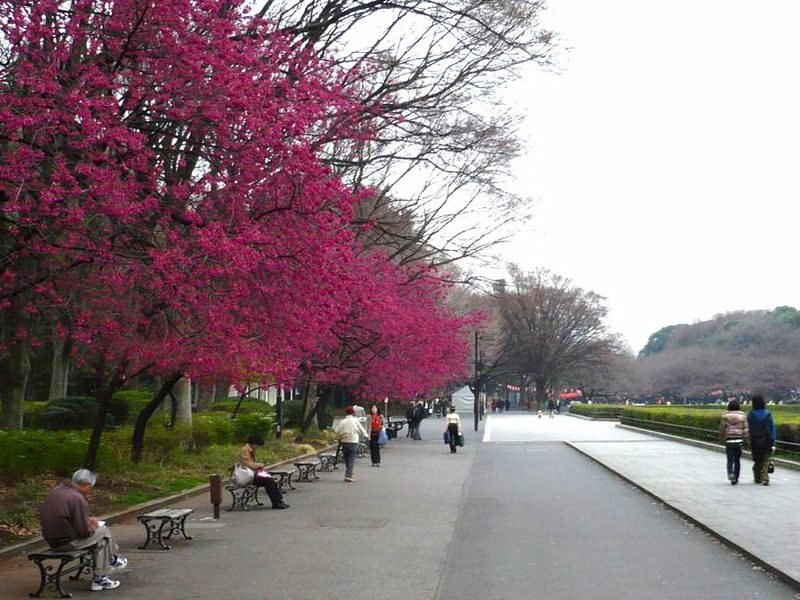 Ueno Koen Park, Tokyo Image by what to do in Tokyo in 3 days blog.