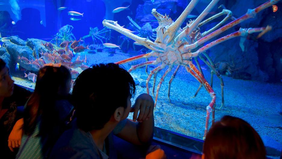 Osaka Aquarium, Japan