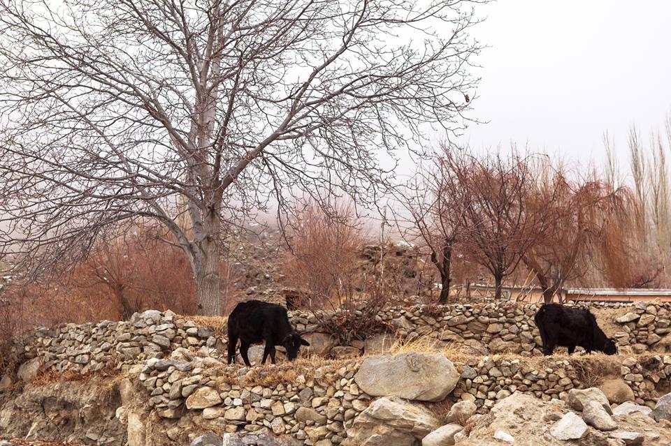 pakistan travel blog trip tours hunza valley