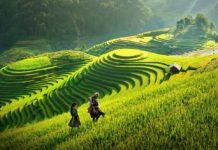 Beautiful rice terrace fields in Sapa. Image of Sapa trekking blog.