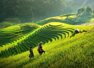 Beautiful rice terrace fields in Sapa. Image of Sapa trekking blog.