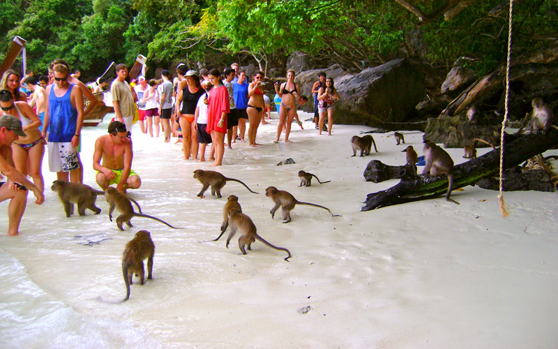 Monkey Beach in Koh Phi Phi3