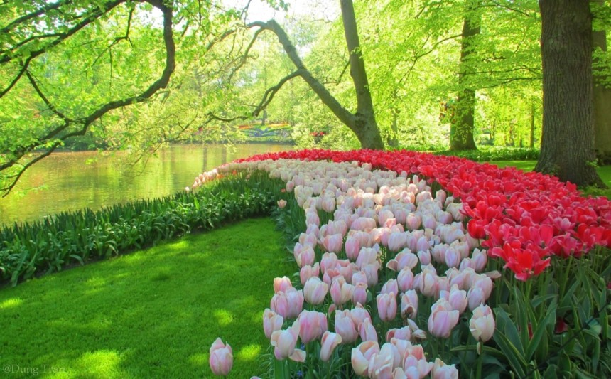 Netherlands-best experiences-paradise for you (6)