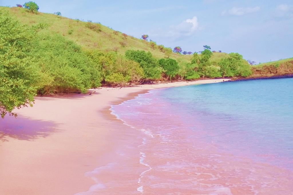 Komodo Island Pink Beach Tour