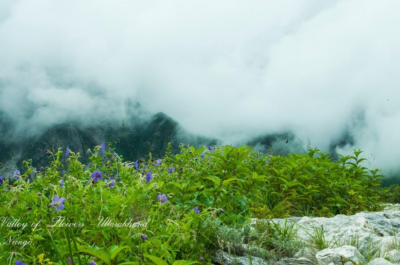 valley of flowers india bhyundar valley how to reach valley of flowers (1)