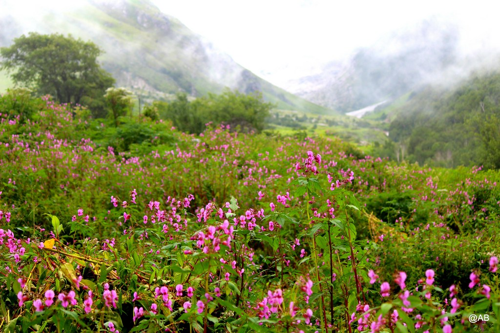 valley of flowers india bhyundar valley how to reach valley of flowers