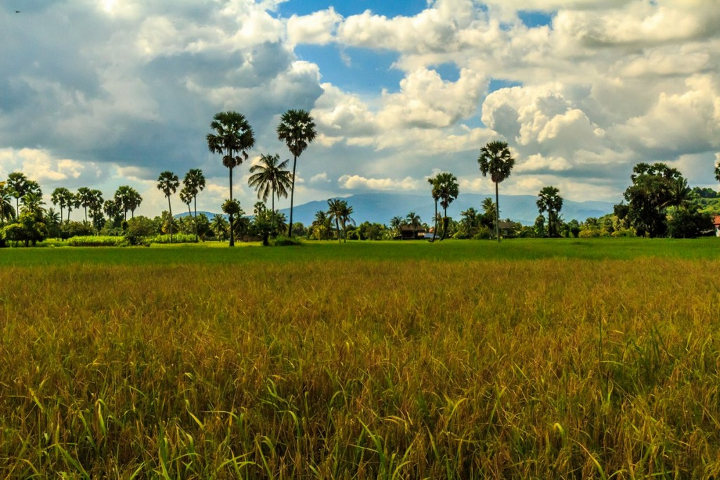 Kampot-countryside-2389-1200x800