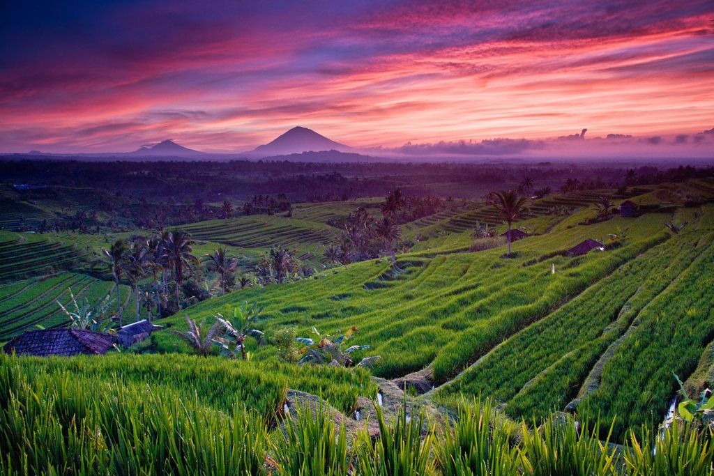 Terraced fields bali1