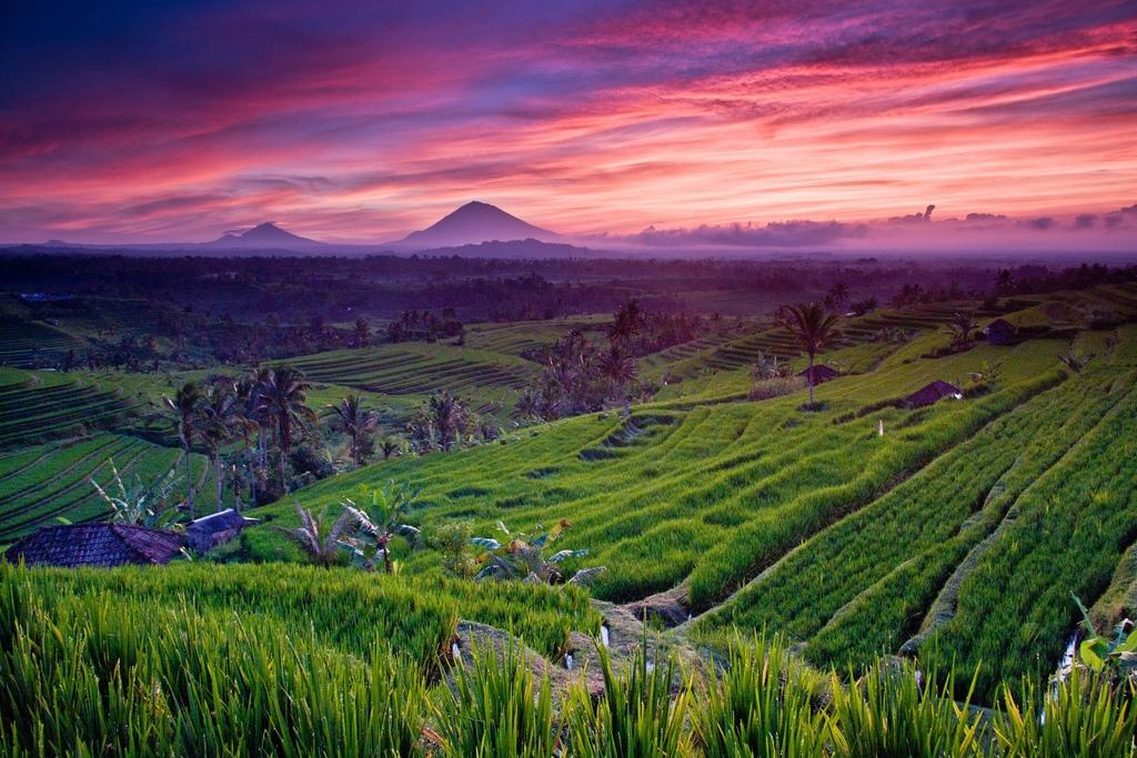 Terraced fields bali1