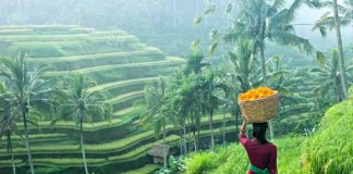 Terraced fields bali2