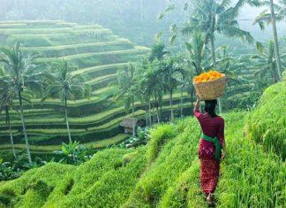Terraced fields bali2