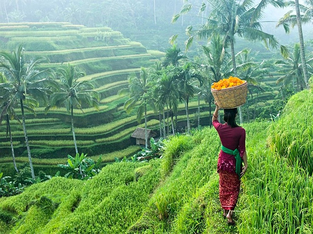 Terraced fields bali2 Image by: bali travel guide blog.