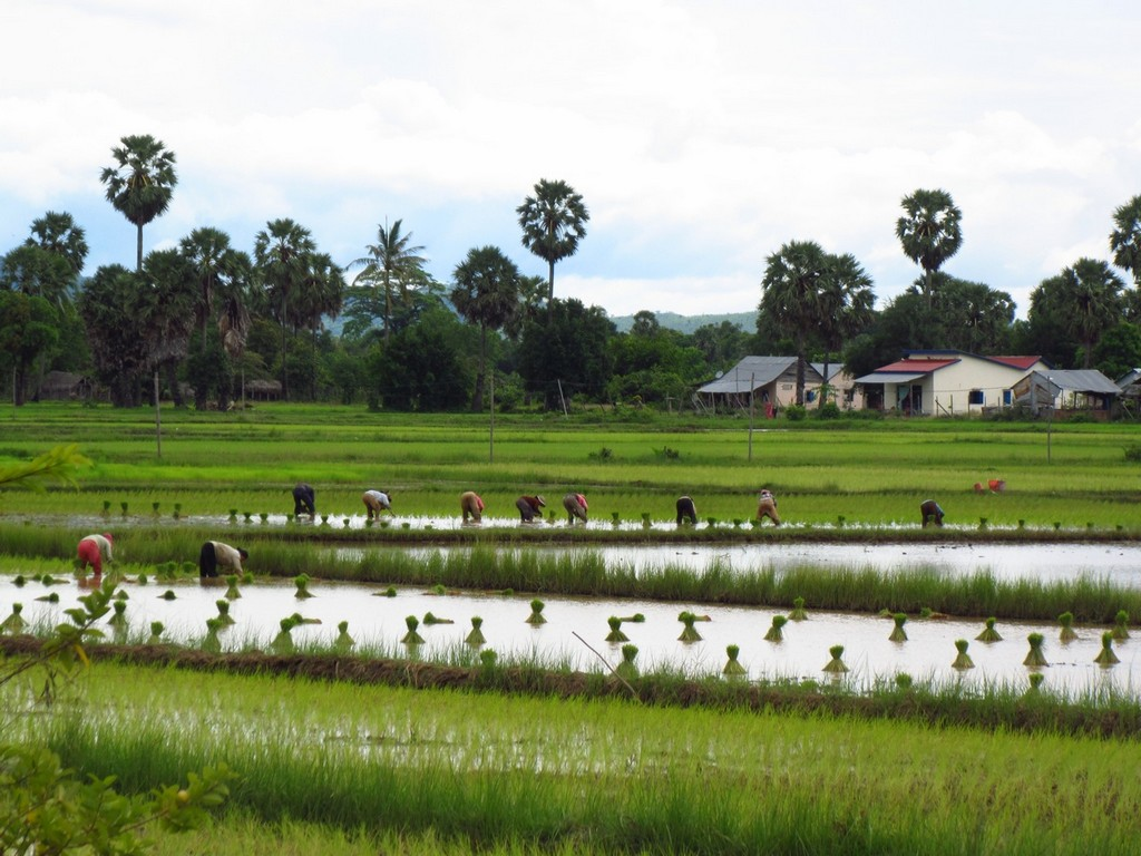 kampot-countryside