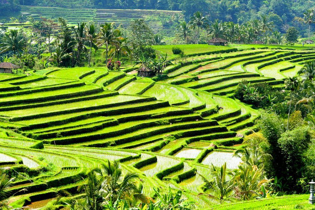 jatiluwih rice terraces bali (1)