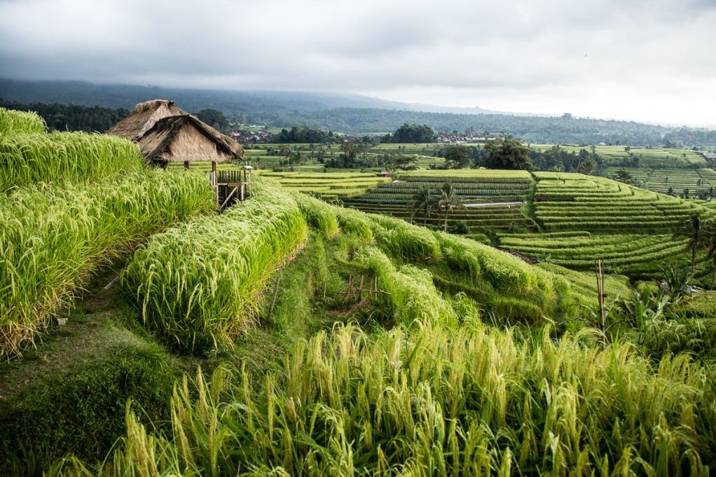 Famous Jatiluwih rice terraces in Bali Credit image: best islands in southeast asia blog.
