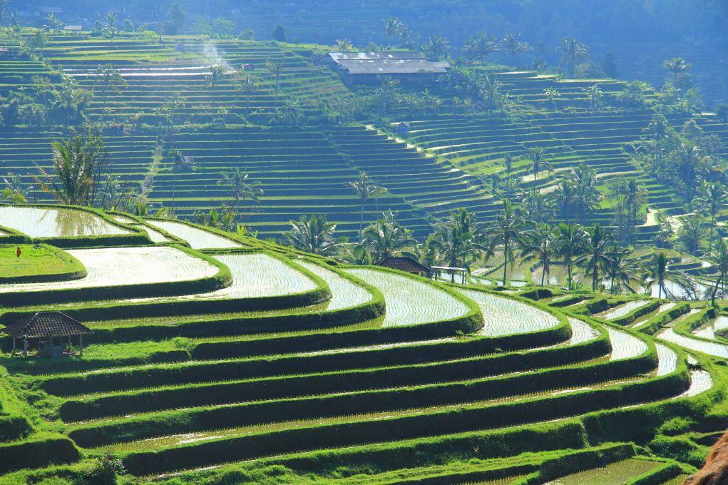 Famous Jatiluwih rice terraces in Bali