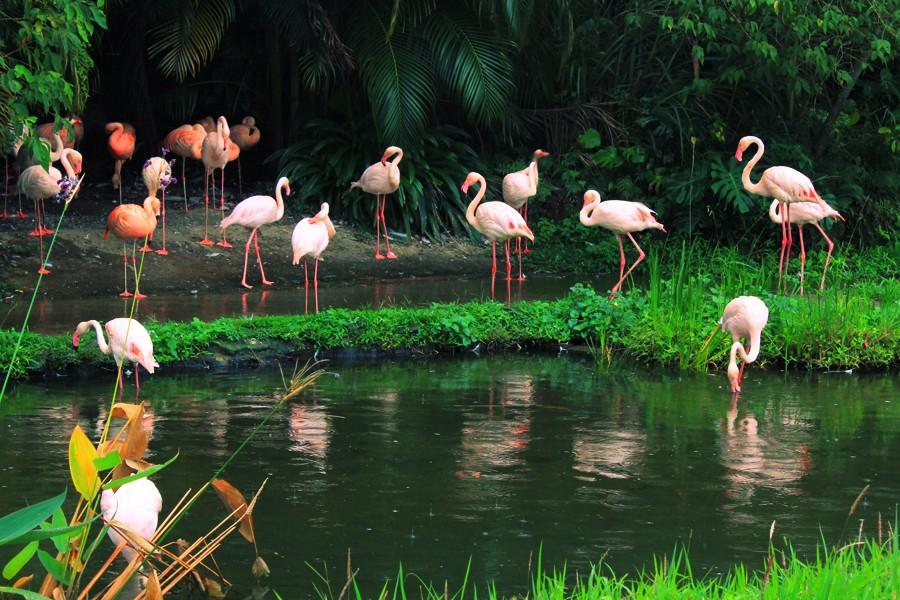 Taipei-Zoo1 3 days in taipei