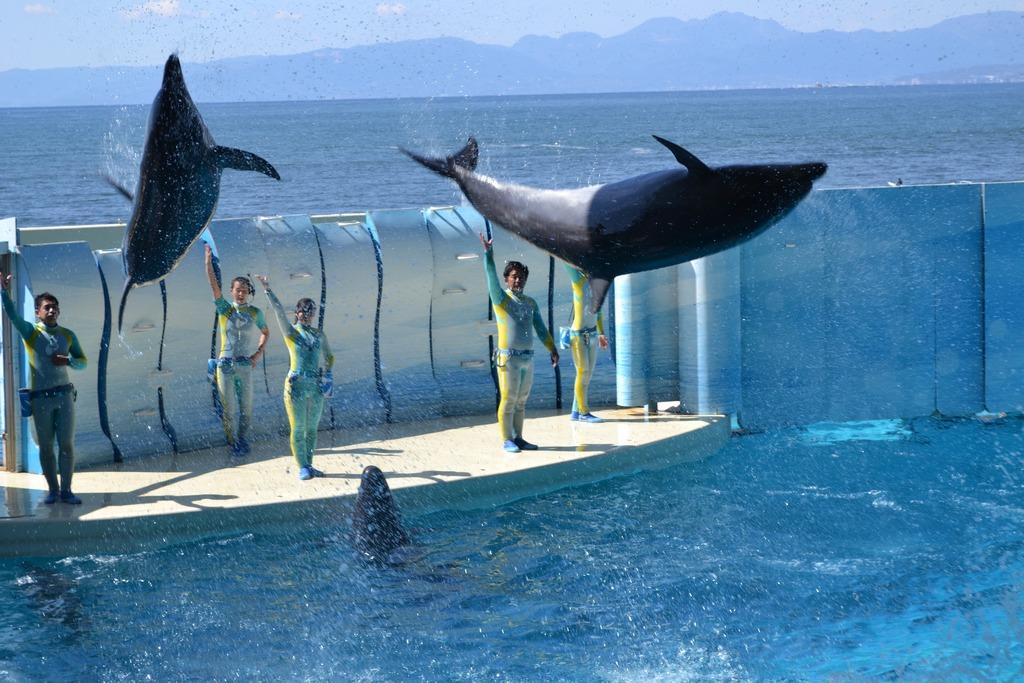 Enoshima Aquarium tokyo2
