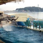 Top 3 best aquariums in Tokyo and around