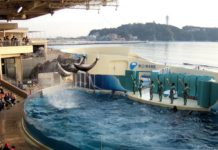 Enoshima Aquarium tokyo3