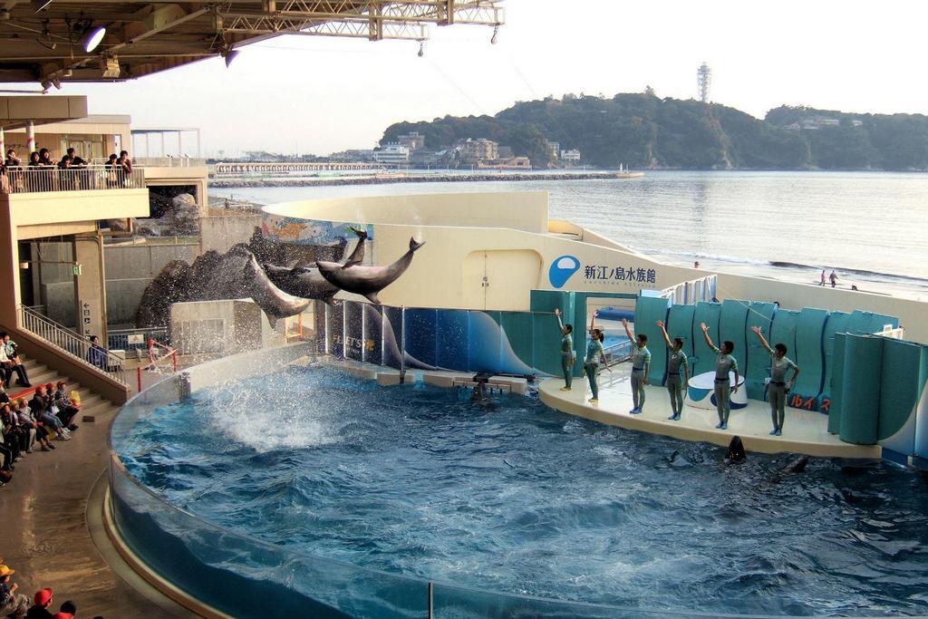 Enoshima Aquarium tokyo3 best aquarium in tokyo tokyo aquarium tokyo aquarium japan