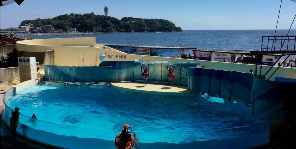Enoshima Aquarium tokyo4