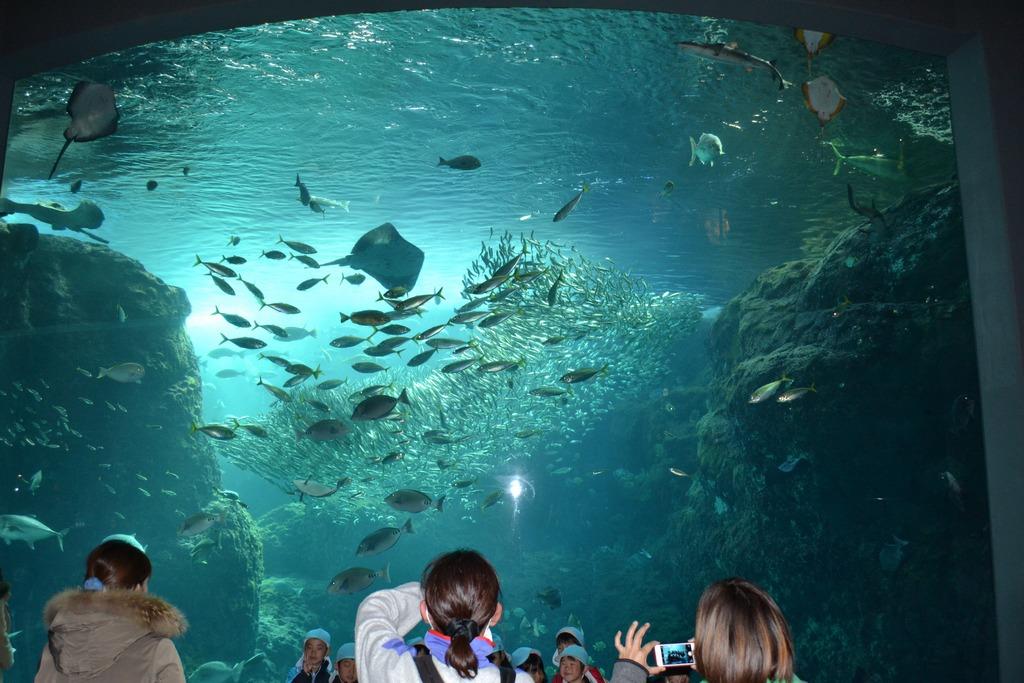 Enoshima Aquarium tokyo5