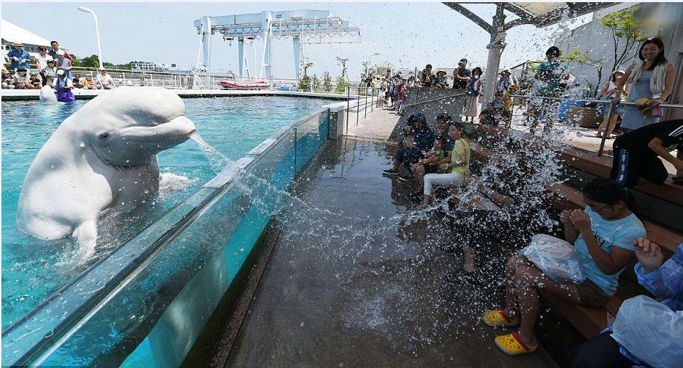 Hakkeijima Sea Paradise tokyo best aquarium in tokyo tokyo aquarium tokyo aquarium japan