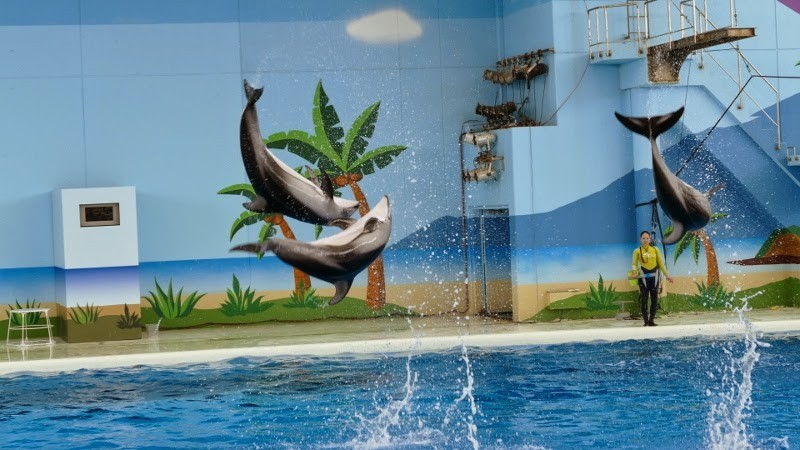 Hakkeijima Sea Paradise tokyo5 best aquarium in tokyo tokyo aquarium tokyo aquarium japan