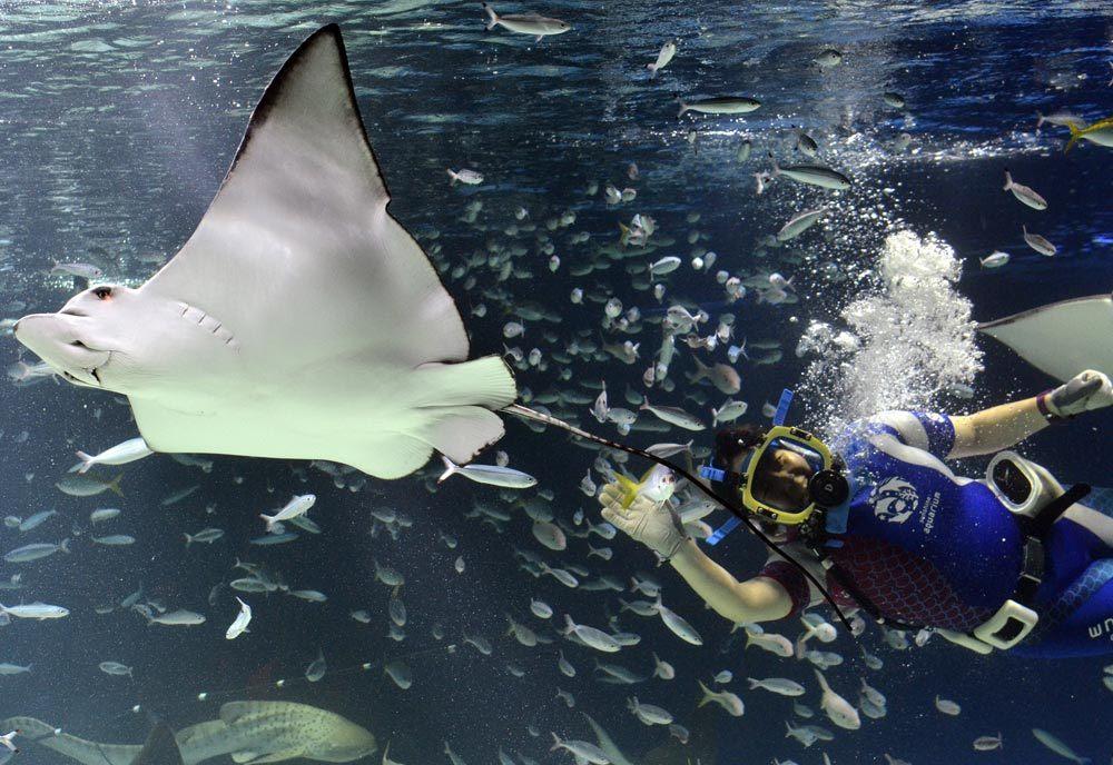 sunshine_aquarium__ikebukuro_tokyo3 best aquarium in tokyo tokyo aquarium tokyo aquarium japan