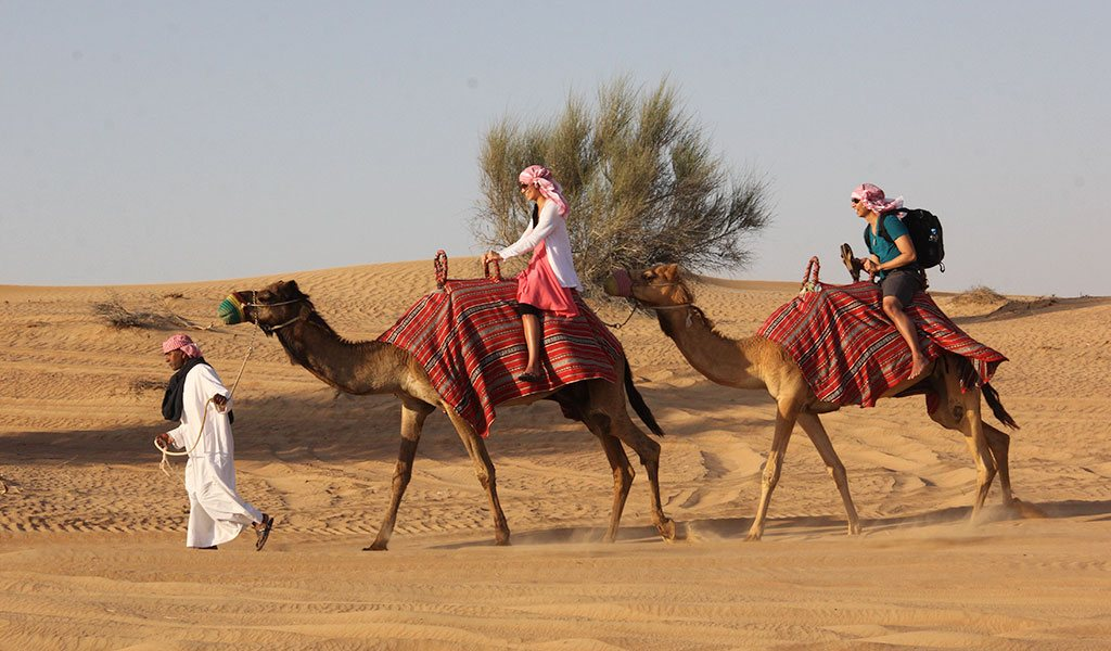 Drive camel in dubai best thing to do in dubai3 living nomads drive camel in dubai best thing to do in dubai3 altavistaventures Choice Image