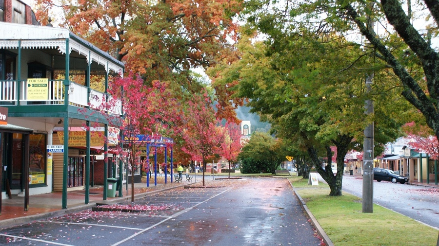 Bright town australia fall foliage places (1)