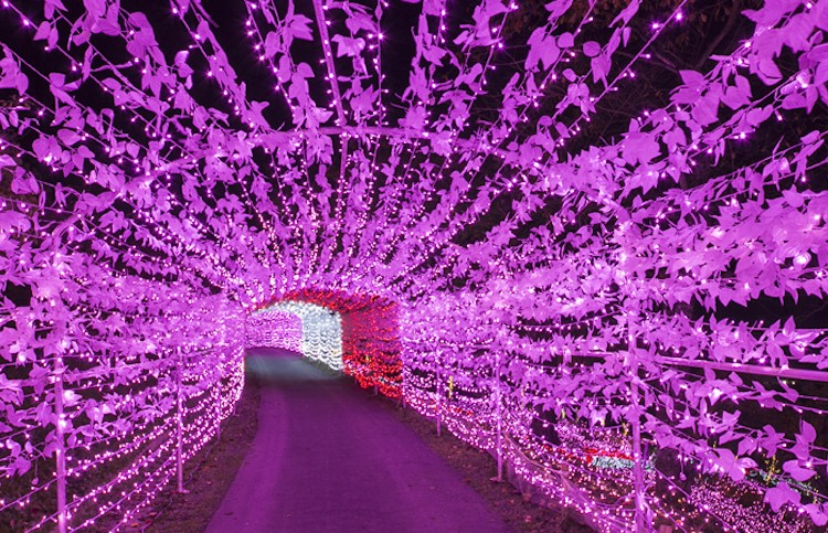 Sagamiko Illumination Forest 1